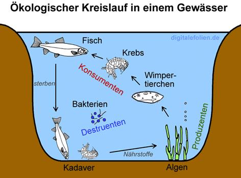 Aufgabe for Welche fische fressen algen im teich